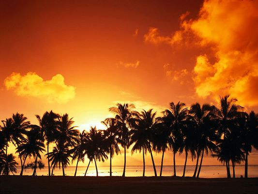 click to free download the wallpaper--Beautiful Image of Nature Landscape, a Line of Palm Trees, the Setting Sun, Golden Look