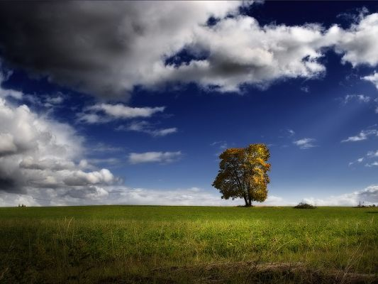 Beautiful Image of Nature Landscape, a Tall Tree Among Green Grass, the Blue Sky