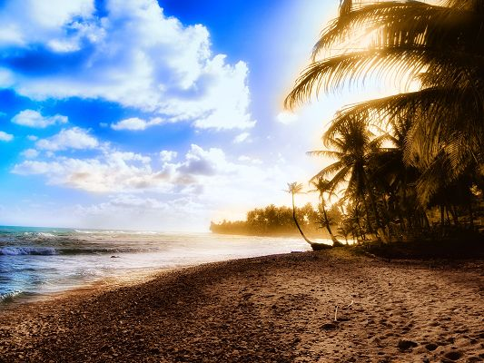 click to free download the wallpaper--Beautiful Image of Nature Landscape, the Blue Sky, Palms Alongside, Sunny Bay