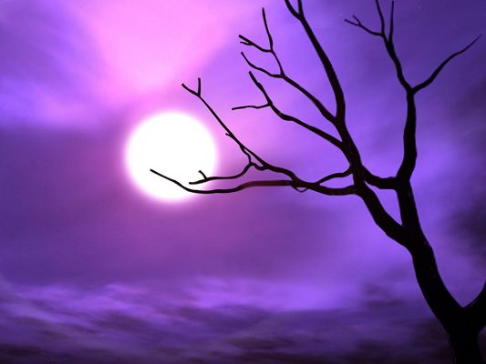 Beautiful Image of Nature Landscape, the Purple Sky, Soft Moonlight Shadow, Cozy Scene