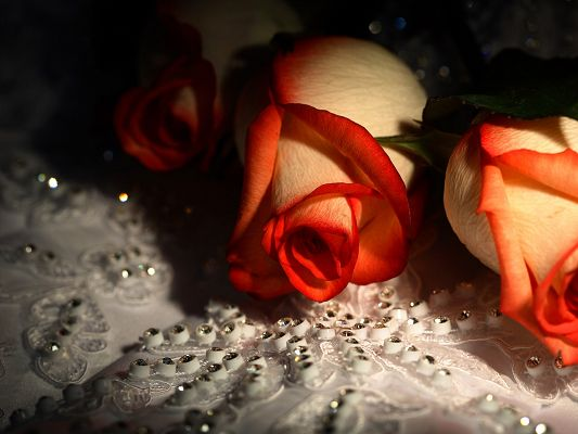 click to free download the wallpaper--Beautiful Images of Flowers, Orange Roses on Pearl, Both Shinning and Good-Looking