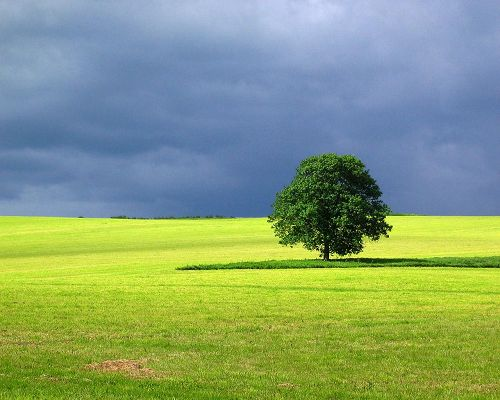 click to free download the wallpaper--Beautiful Images of Landscape, a Green Tree Standing Tall, the Blue Sky, Incredible Scene