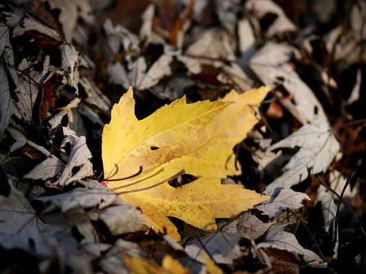 Beautiful Images of Natural Scene, a Yellow Leaf Among Gray Ones, Typical Autumn Picture