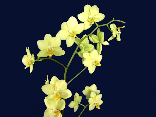 click to free download the wallpaper--Beautiful Images of Nature Landscape, Green Blooming Orchideas, Black Background