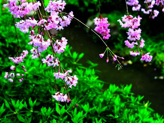 click to free download the wallpaper--Beautiful Images of Nature Landscape, Purple Little Flowers and Green Grass, What a Contrast!