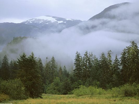 Beautiful Images of Nature Landscape, Rain Forest, High Mountains, Misty Scene