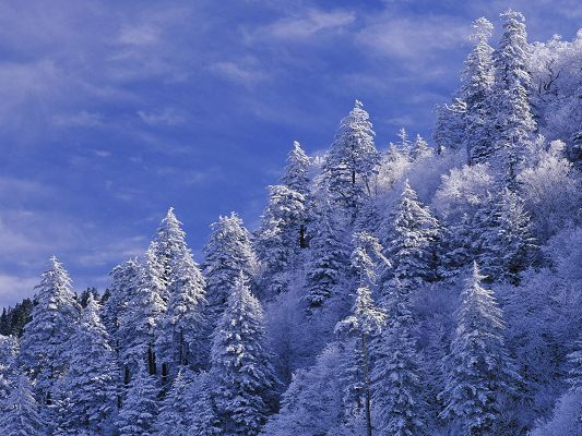 click to free download the wallpaper--Beautiful Images of Nature Landscape, Thick Snow Covered Trees, the Blue Sky, Incredible Look