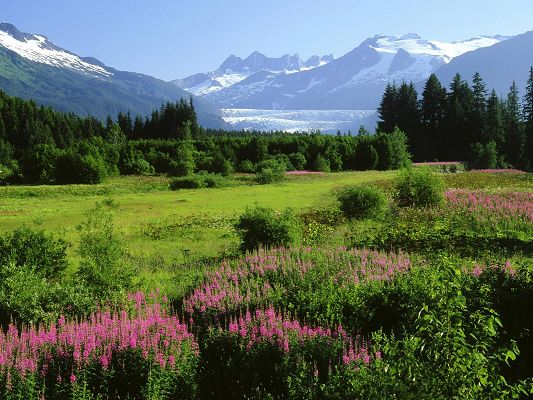 Beautiful Images of Nature Landscape, a New Land, Snow-Capped Mountains, Purple Blooming Flowers