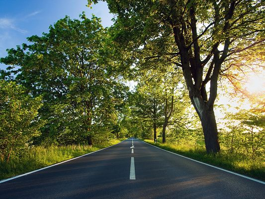 click to free download the wallpaper--Beautiful Images of Nature Landscape, a Straight Road, Tall Green Trees Alongside, Summer Scene