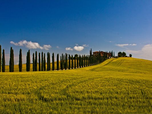 click to free download the wallpaper--Beautiful Italian Landscape, a Field of Green Plants, the Blue Sky
