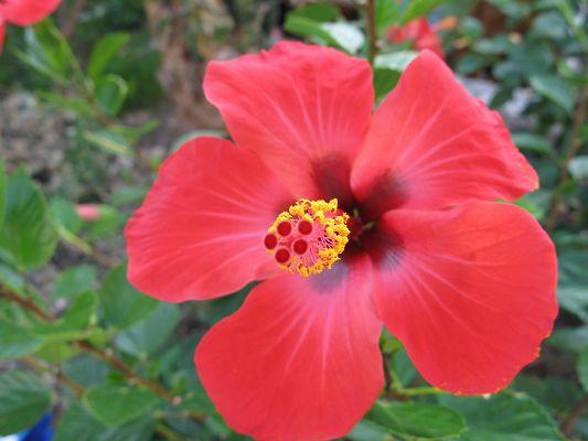 Beautiful landscape of flowers a red flower in bloom yellow stamen beautiful landscape of flowers a red flower in bloom yellow stamen strecthed out mightylinksfo