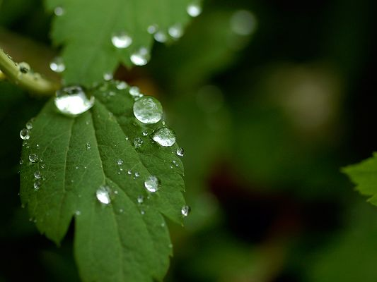 Beautiful Landscape of Nature, Leaf after Summer Rain, Crystal Clear Waterdrops All Over