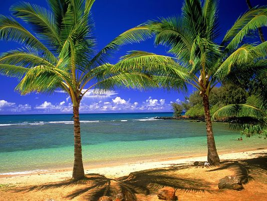click to free download the wallpaper--Beautiful Landscape of Nature, Palm Trees on the Beach, the Peaceful Sea, the Blue Sky