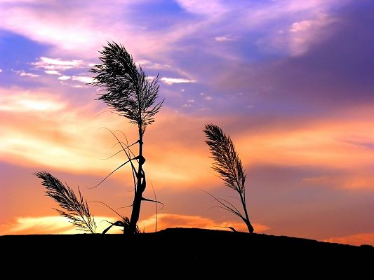 click to free download the wallpaper--Beautiful Natural Landscape Image, the Pink Sky, the Setting Sun, Dancing Grass