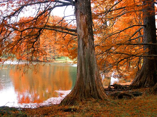 Beautiful Natural Landscape, Pacific Lake, Yellow Leaves Reflect, Autumn Scene