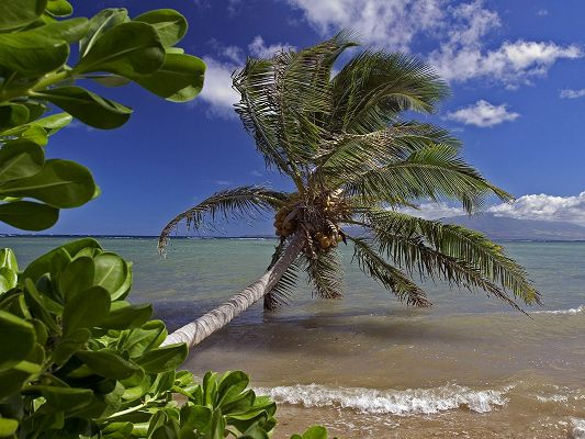 click to free download the wallpaper--Beautiful Photos of Nature Landscape, Palm Trees Leaning, the Unpeaceful Sea, the Blue Sky