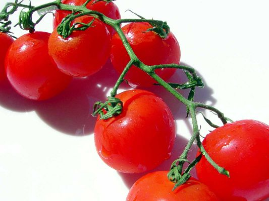Beautiful Pics of Fruits, Red Tomatoes Under Green Leaves, White Background, Incredible Look
