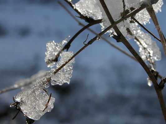 click to free download the wallpaper--Beautiful Pics of Natural Landscape, Ice on Branch, Refuse to Melt