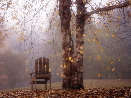 Beautiful Pics of Nature, Autumn Leaves Are Yellow and Falling, a Chair Under the Tree