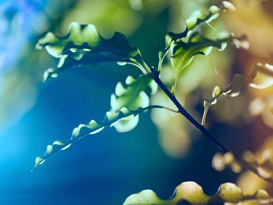 Beautiful Pics of Nature Landscape, Green Leaves, Lighted Up by Sunlight, Mere Background