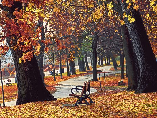 Beautiful Posts of Nature, Autumn Retreat, Yellow and Fallen Leaves, Wooden Long Chairs Everywhere