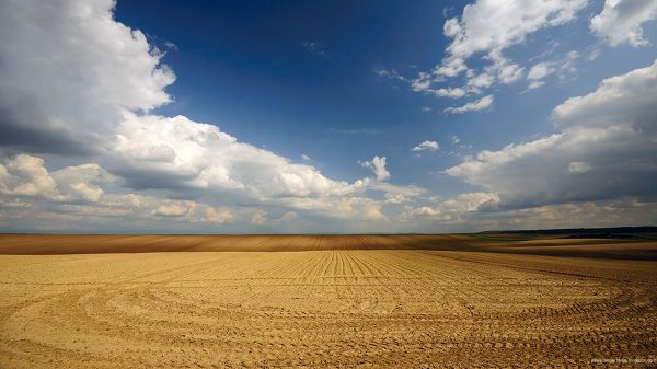 click to free download the wallpaper--Beautiful Sceneries of the World - A Full Screen of Yellow Wheats, the Blue Sky, Fields Seem Endless