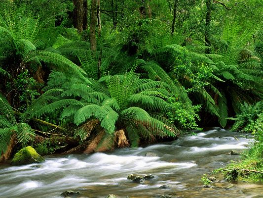 Beautiful Sceneries of the World - Yarra Ranges National Park Australia in Pixel of 1600x1200, Green Plants and Rush River