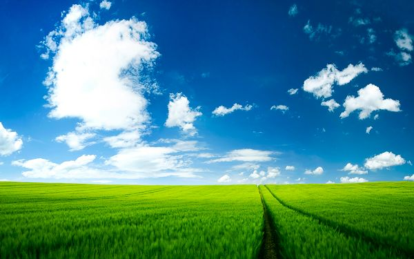 Beautiful Scenery Images - Summer Scenery Post in Pixel of 2560x1600, Green Plants and the Blue Sky, Unbelieveable Scene!