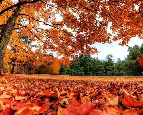 Beautiful Scenery of Nature, Yellow Fallen Leaves, Autumn Scene, Be in Better Growth Next Summer