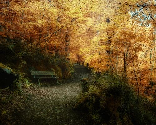 Beautiful Scenes of Nature, Autumn Season, Yellow Leaves Along a Narrow Road, Impressive Scenery