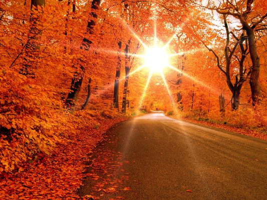 Beautiful Scenes of Nature, Trees with Red Leaves, the Rising Sun, Clean and Straight Road