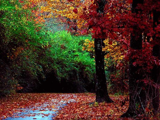 Beautiful Scenes of Nature, a Rain Falling, Plants Are with Waterdrops, Fallen Leaves, Autumn Forest