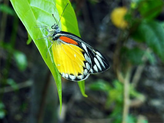 click to free download the wallpaper--Beauty Of Nature, Beautiful Butterfly on Green Leaves, Combine Incredible Scene