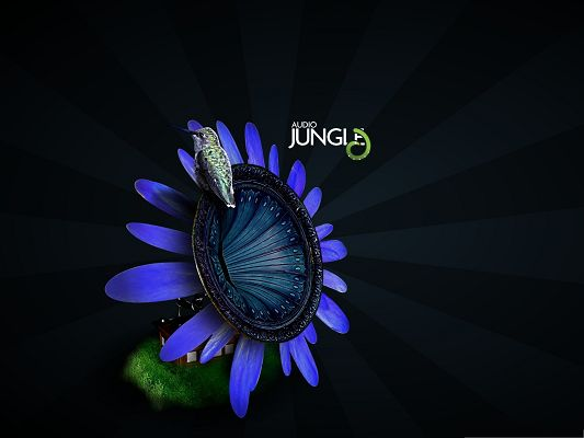 click to free download the wallpaper--Bird On Flower, Gramophone Audio Jungle, Animal and Nature