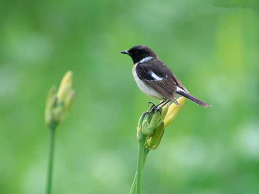 click to free download the wallpaper--Bird Photography, Standing on Green Plant, Feel Good Around Nature Landscape