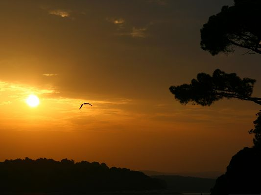 click to free download the wallpaper--Bird and Nature, Big Bird Flying in the Sunset, the Golden Sky