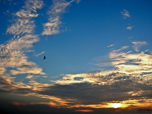 click to free download the wallpaper--Bird and Nature, Bird Heading Hurriedly for Home, the Setting Sun
