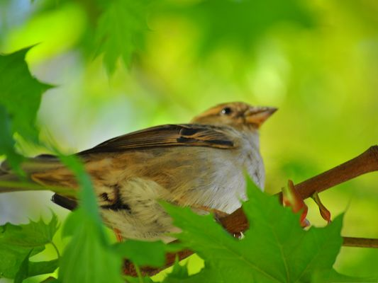 click to free download the wallpaper--Bird and Nature, a Small Bird Among Green Plants and Leaves, Great Scene
