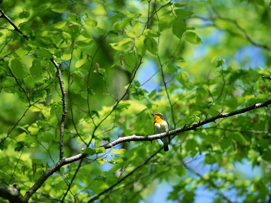 click to free download the wallpaper--Birds Photos, Standing on Tree Branch, Unwilling to Leave the Prosperous Tree