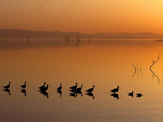 click to free download the wallpaper--Birds at Leisure, a Group of Birds Swimming on the Lake, Peaceful Scene