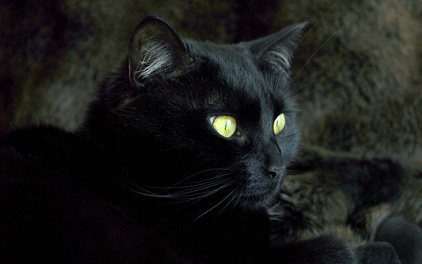 click to free download the wallpaper--Black Cat Image, Yellow Shinning Eyes, Stay in a Cave