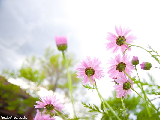click to free download the wallpaper--Blooming Pink Flowers, Little Flower in Great Growth, Incredible Summer Scene