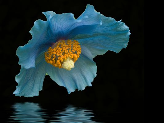 click to free download the wallpaper--Blue Flower Image, Blue Flower Close to the Black Sea, Amazing Scenery