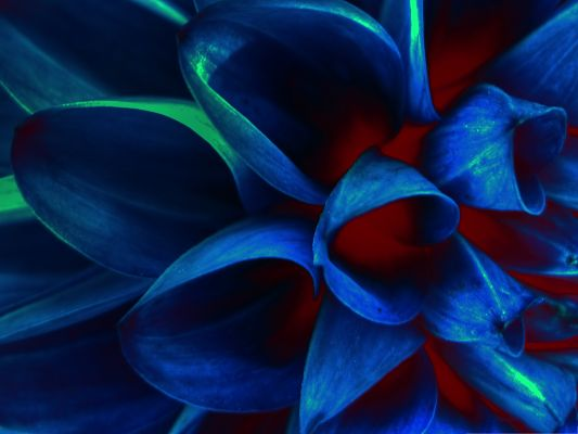 Blue Flower Petals Photo, Blue Blooming Flowers Under Digital Camera