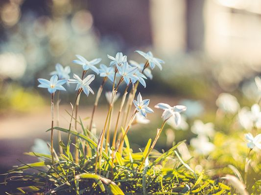 click to free download the wallpaper--Blue Flower Pictures, Little Blooming Flower Under the Sun, Amazing Scene