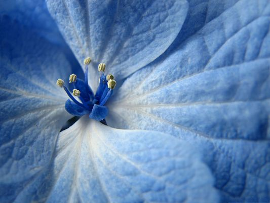 click to free download the wallpaper--Blue Flower Pictures, Little Flower with Long and Wide Petals, Clean and Fresh