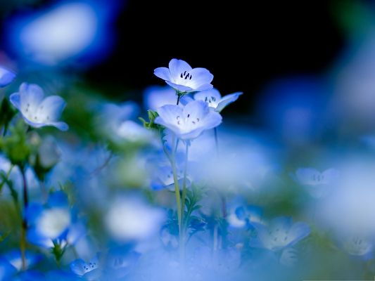 click to free download the wallpaper--Blue Flowers Picture, Tiny Flowers Under Macro Focus, Bubble Fuzzy Background