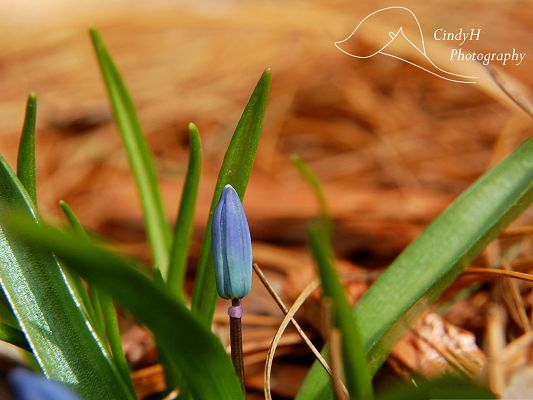 click to free download the wallpaper--Blue Flowers Wallpaper, Little Flowers in Bud, Green Leaves Around It