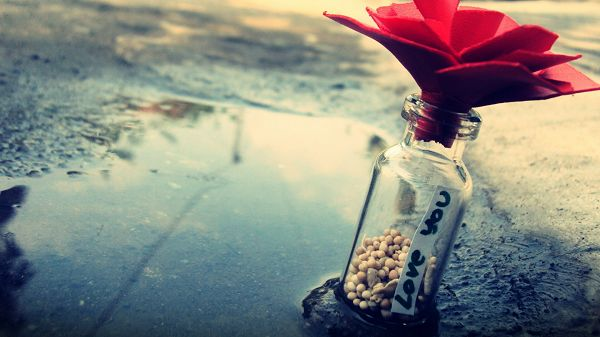 click to free download the wallpaper--Bottle Half Full with Stones, Cork is Like a Red Flower, It is Supposed to Bring in Great Luck to the Receiver - Creative Wallpaper