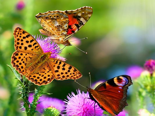Butterflies and Flowers, Beautiful Butterflies and Blooming Flowers, Incredible Scenery